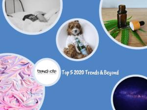Trendincite's Top 5 Trends & Beyond Free Report Title